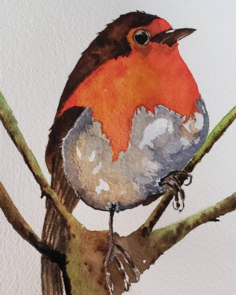 Robin - image 1 - student project