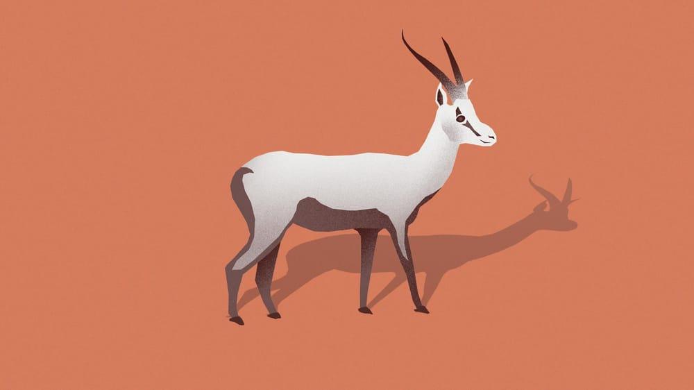 Animal Kingdom - image 3 - student project