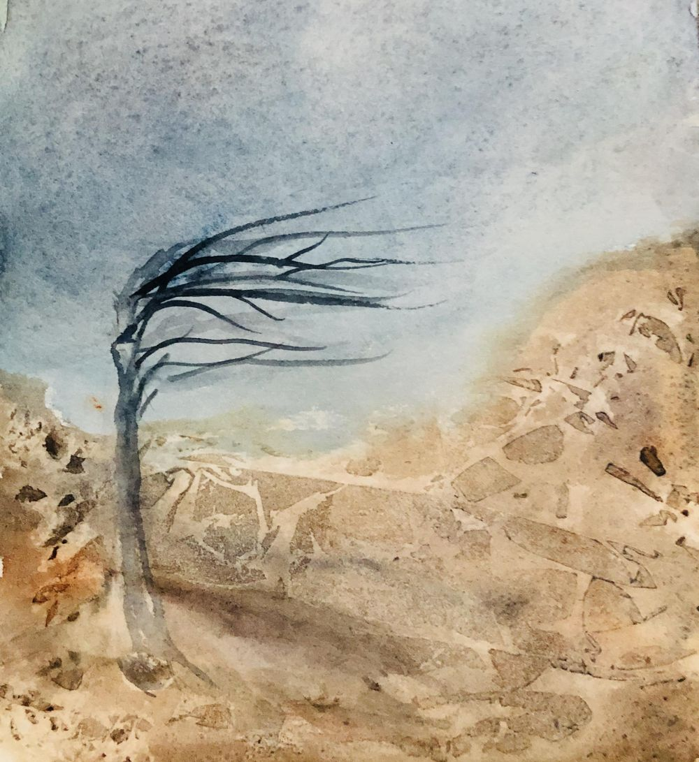 Wind Blown tree on a mountain top - image 1 - student project