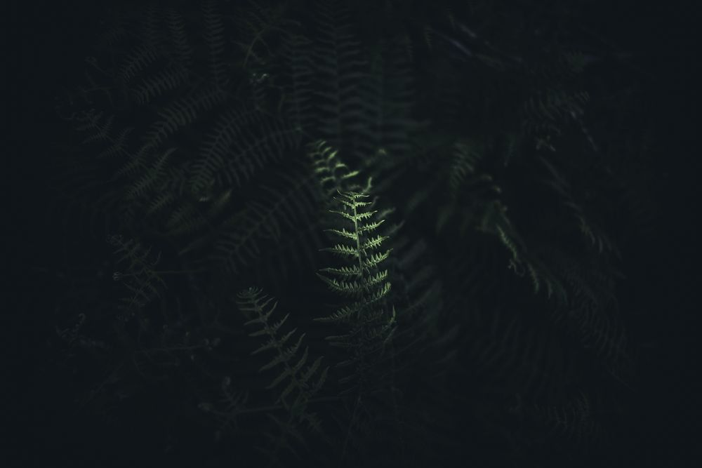 Hike Path - image 4 - student project