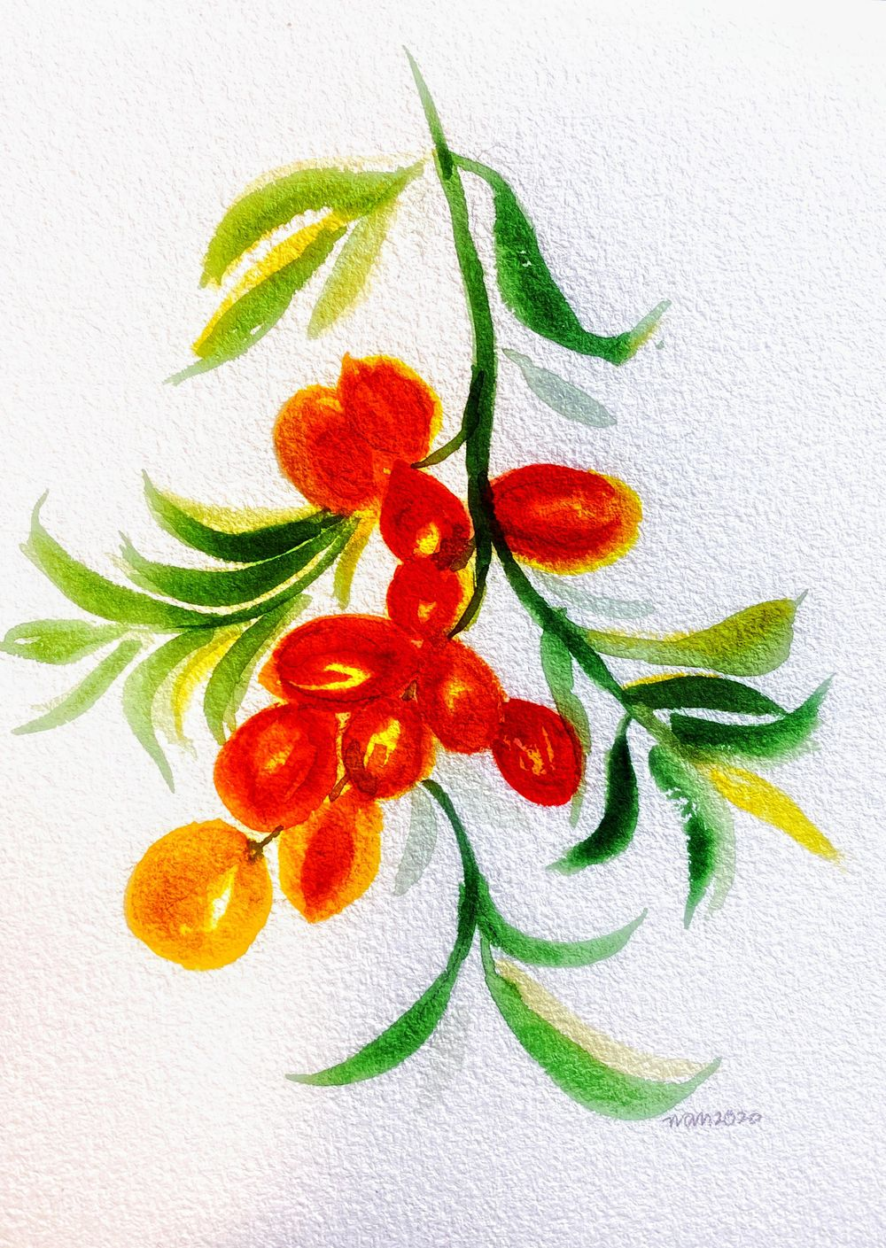 INCredible Poppies, Buckthorn, Squirrel - image 2 - student project