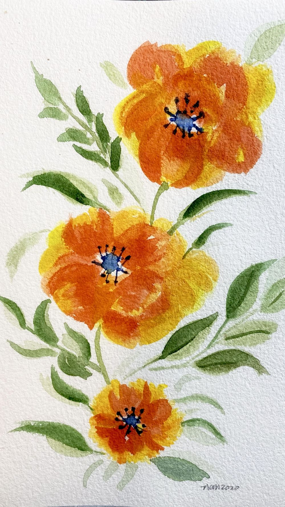 INCredible Poppies, Buckthorn, Squirrel - image 1 - student project