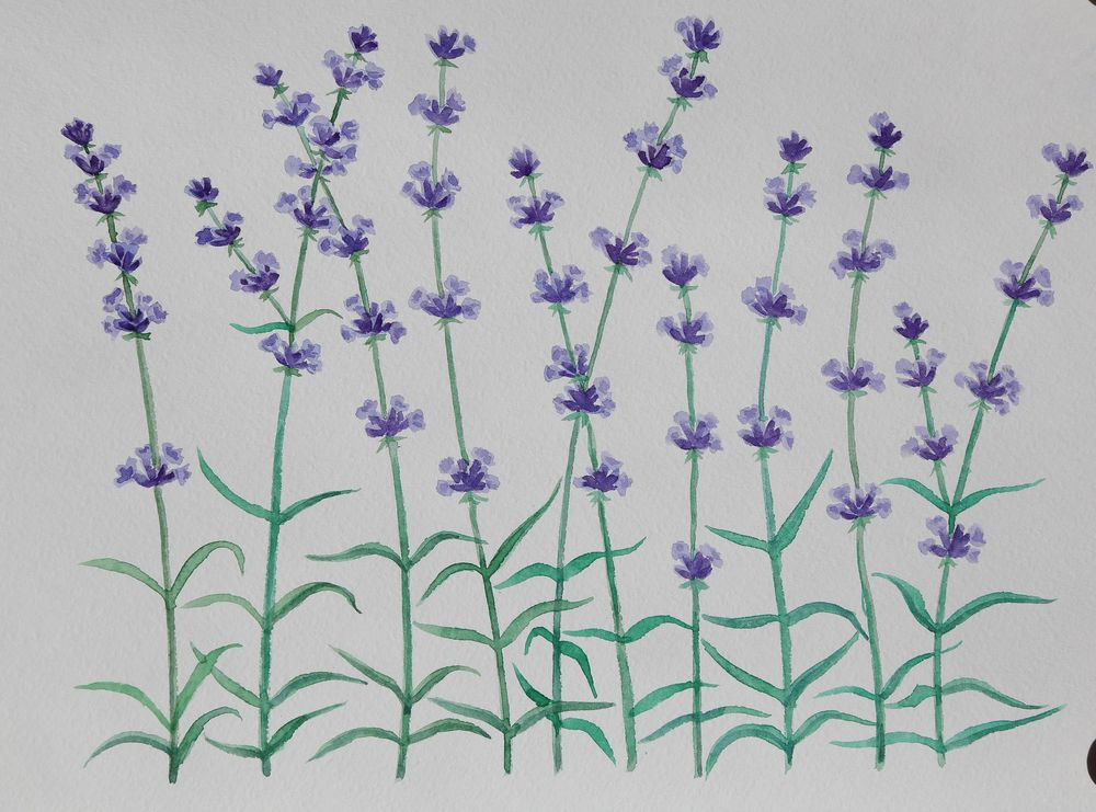 My lavender - image 1 - student project