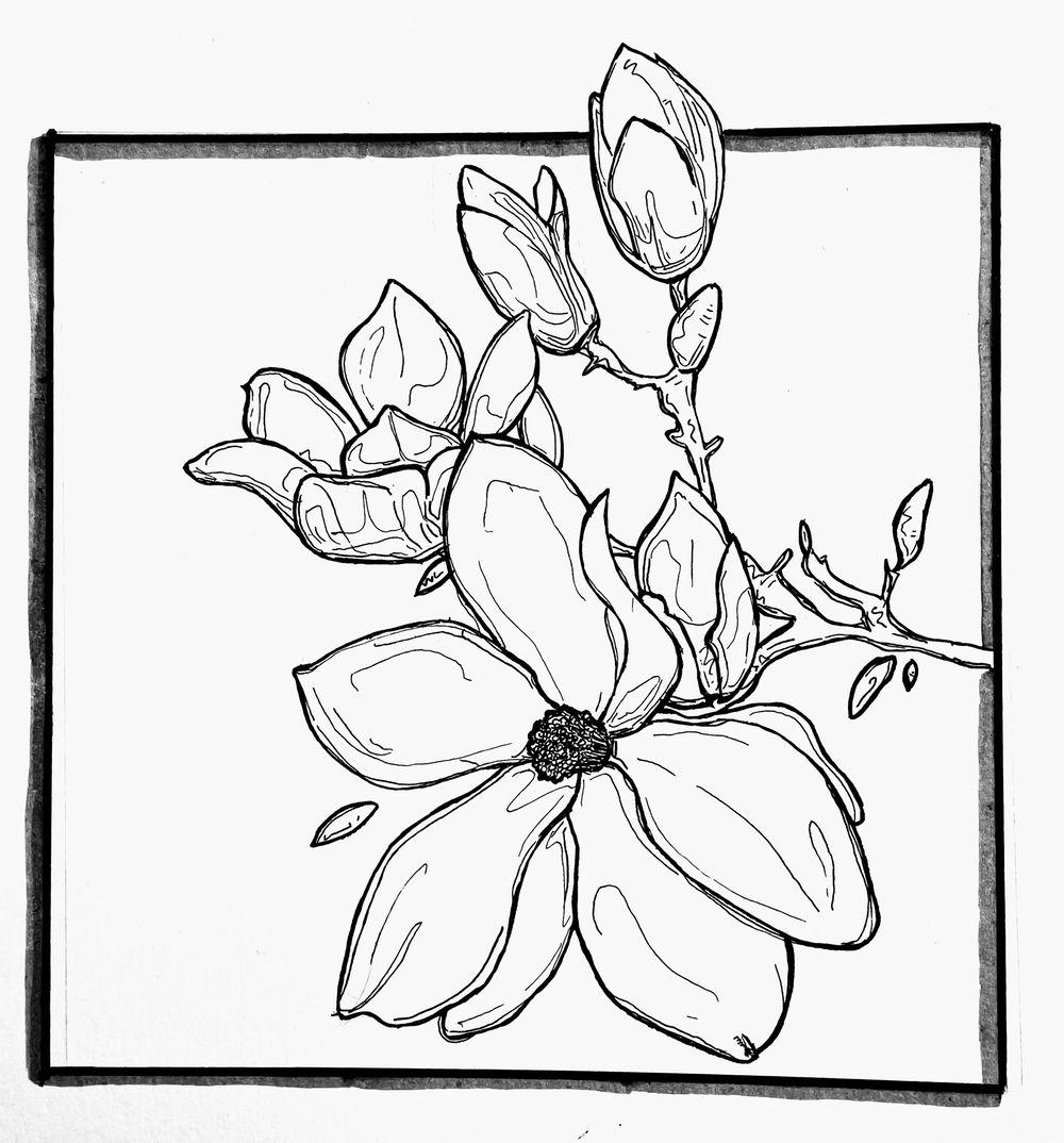 Magnolia, Sunflower, Rose - image 3 - student project