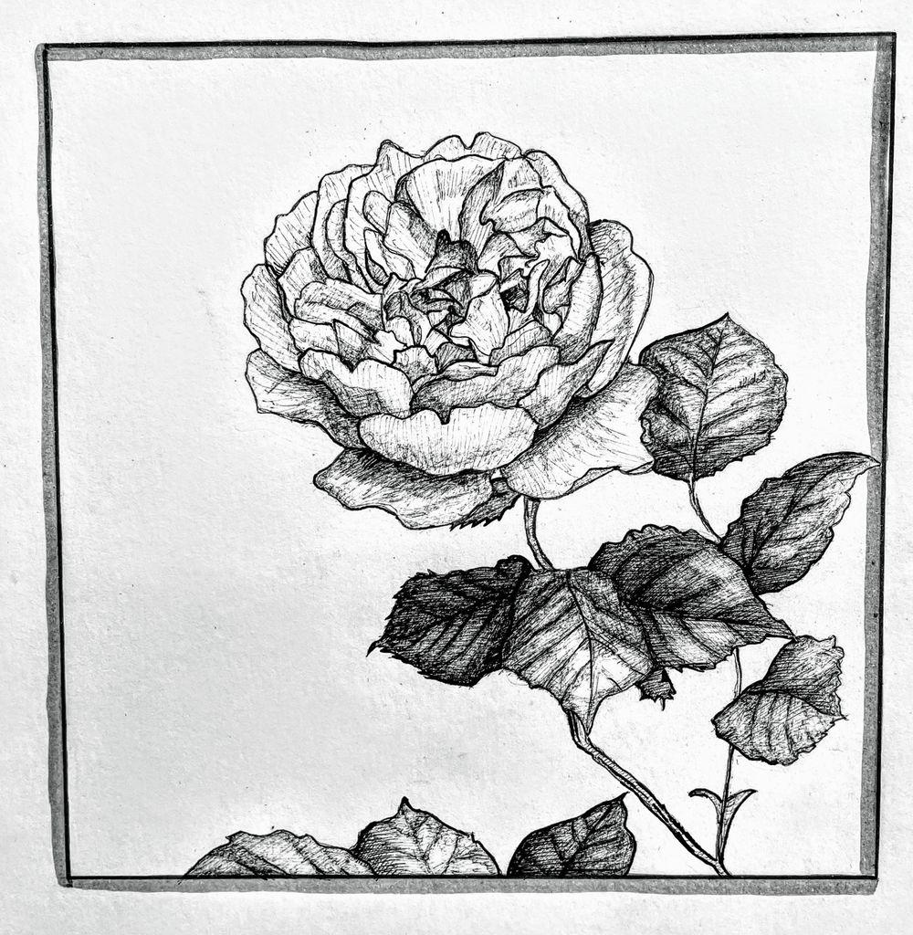 Magnolia, Sunflower, Rose - image 1 - student project