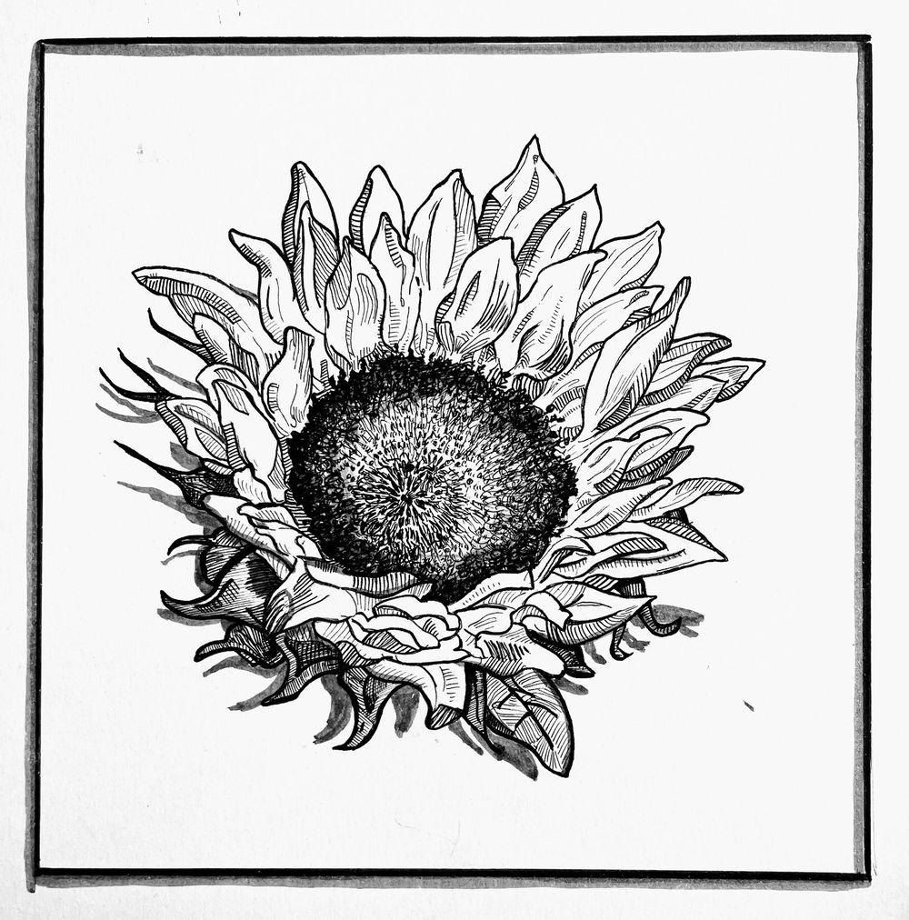 Magnolia, Sunflower, Rose - image 2 - student project