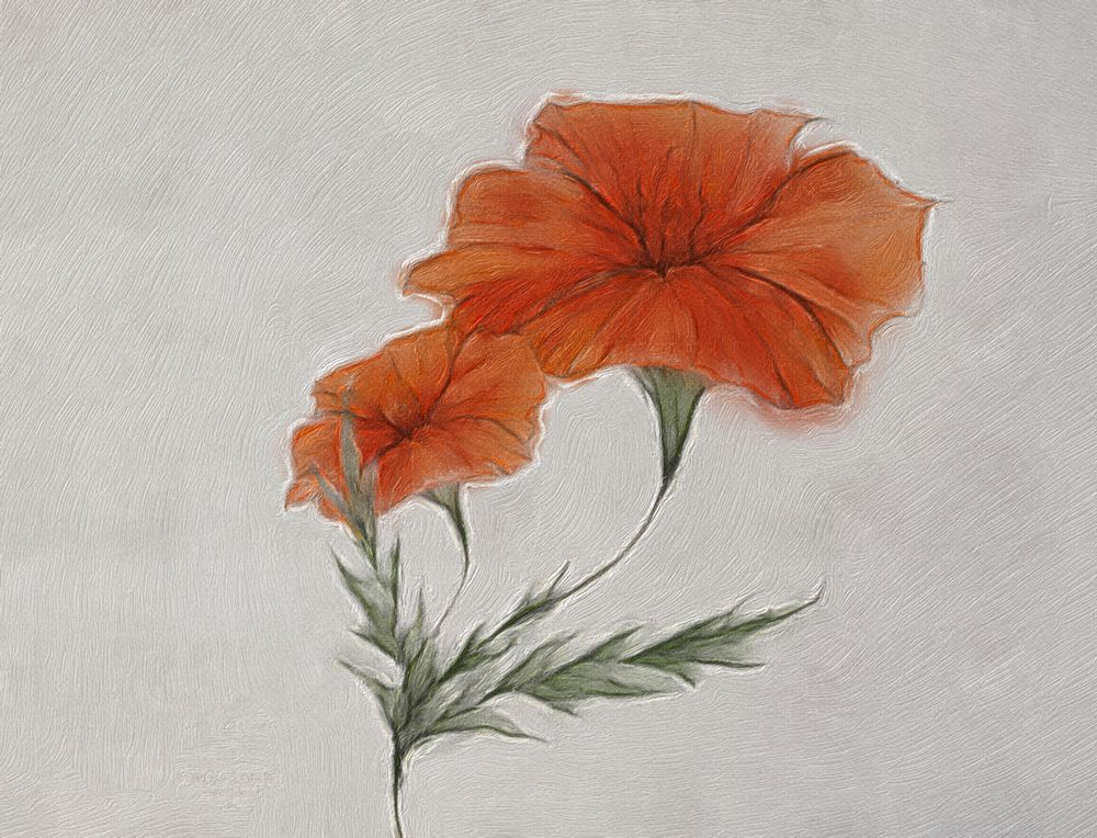 Poppy Stamp - image 1 - student project