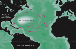 Wide Sargasso Sea - image 14 - student project
