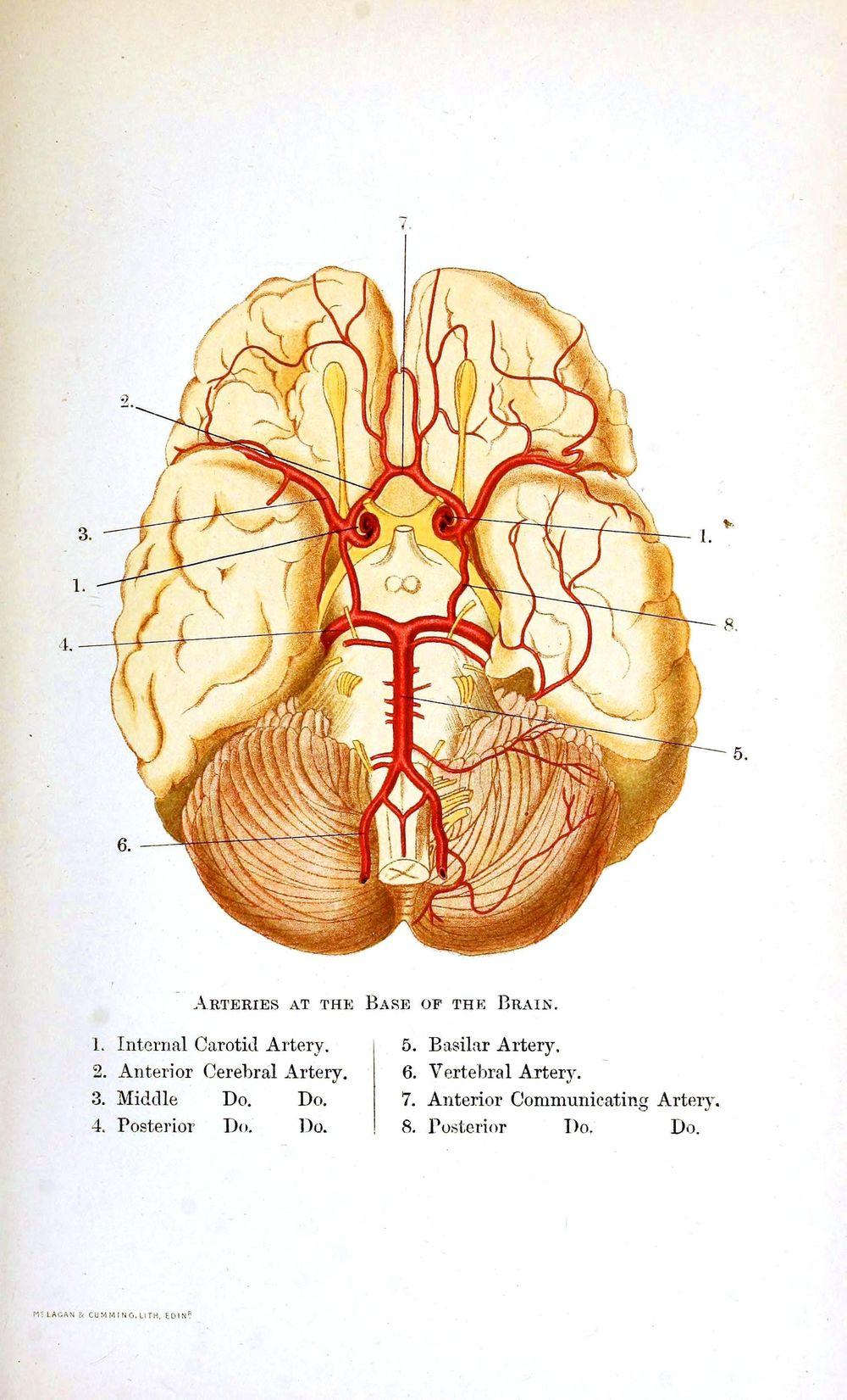 Brain Walnuts! - image 1 - student project