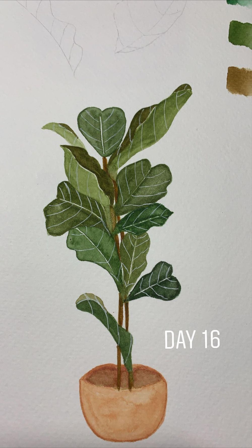 Fiddle Fig Leaf - May 2020 - image 1 - student project
