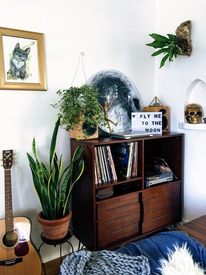 My mounted Staghorn Fern, snake plants, pothos, philodendron, and others. - image 1 - student project