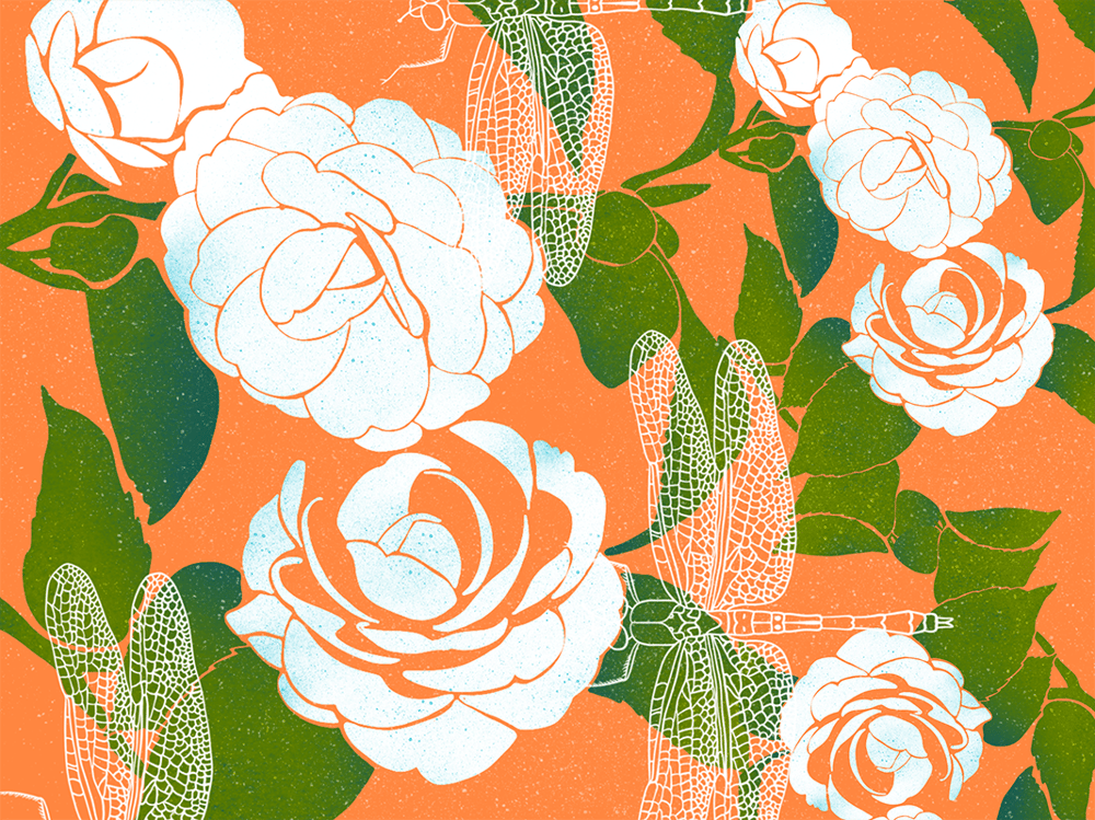 Botanical illustrations - image 1 - student project