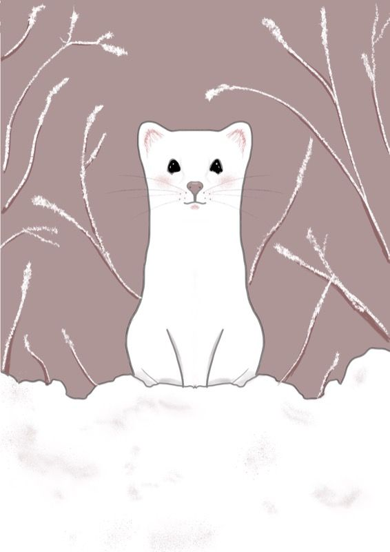 Ermine - image 1 - student project