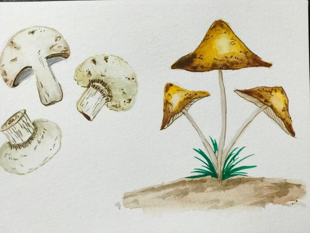 Cute little mashroom - image 3 - student project