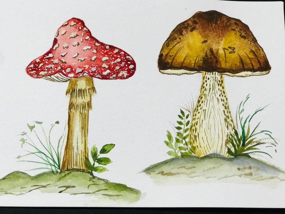 Cute little mashroom - image 1 - student project