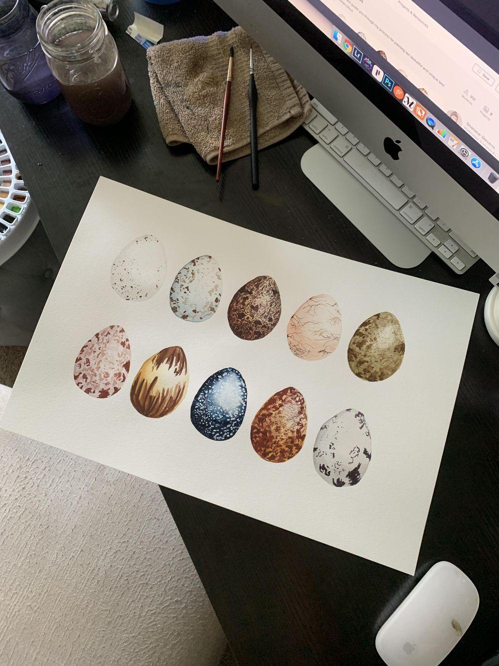 Bird Eggs - image 1 - student project