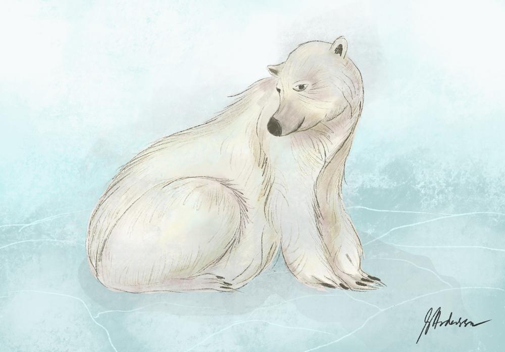 A Sweet Polar Bear - image 1 - student project