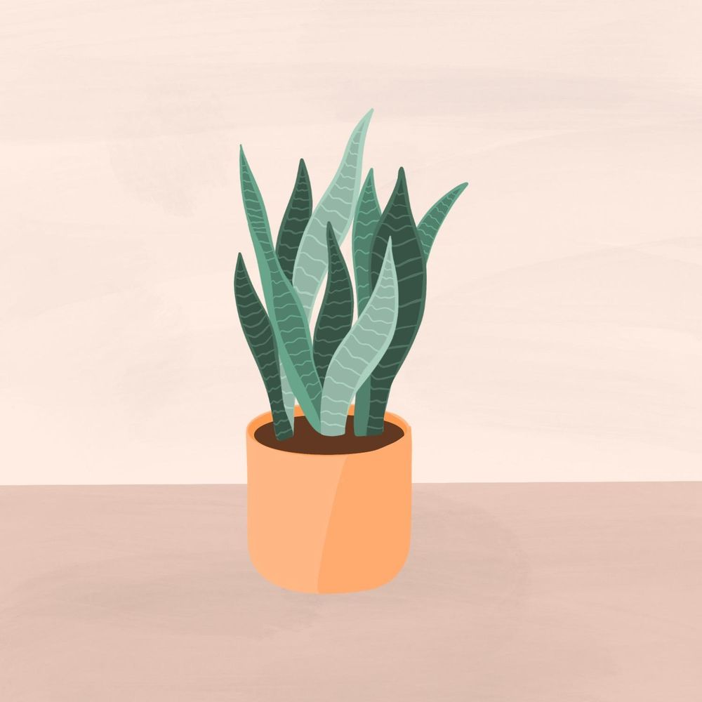 Snake Plant - image 2 - student project
