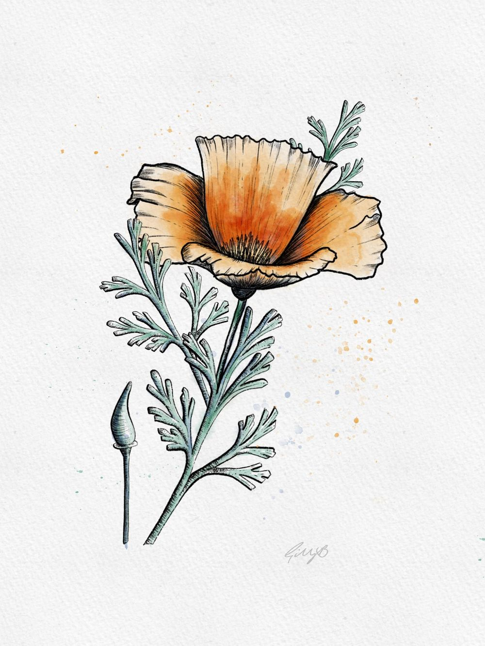 Gill's Poppy - image 3 - student project
