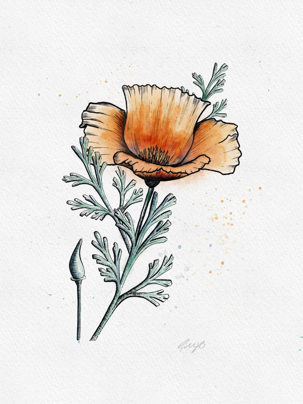Gill's Poppy - image 2 - student project