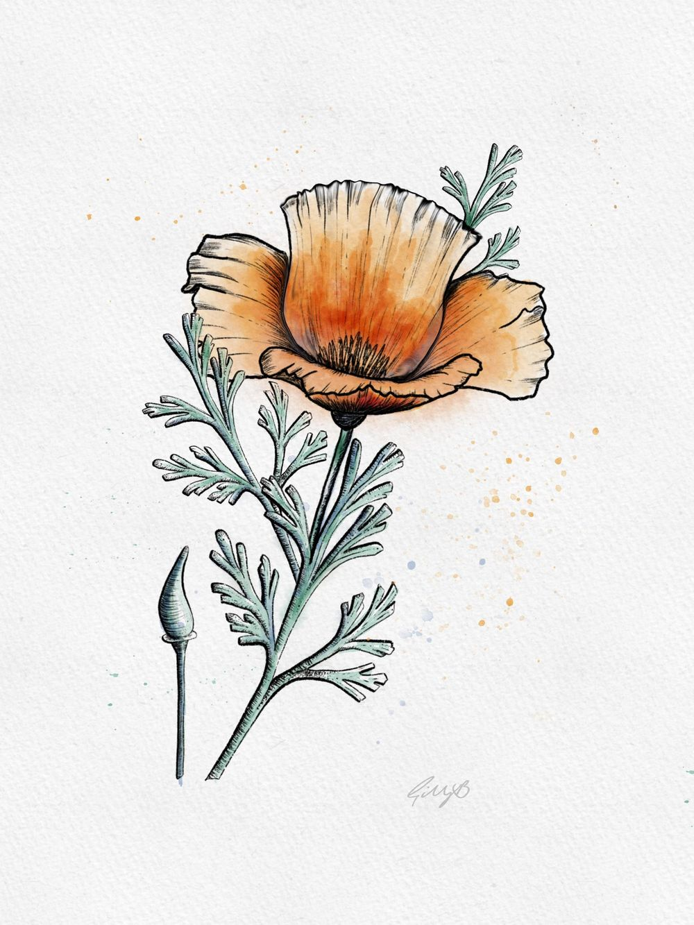 Gill's Poppy - image 1 - student project