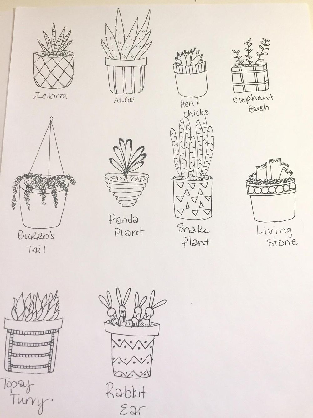 My Cactus practice :) - image 2 - student project