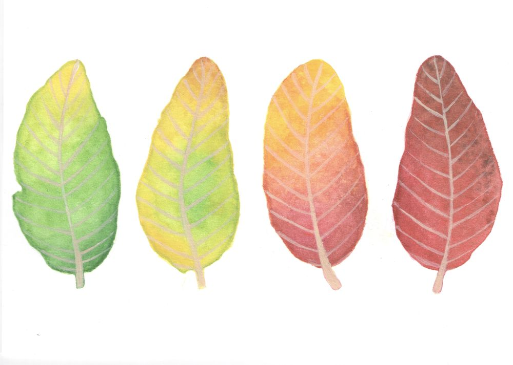 Watercolor leaves. - image 2 - student project