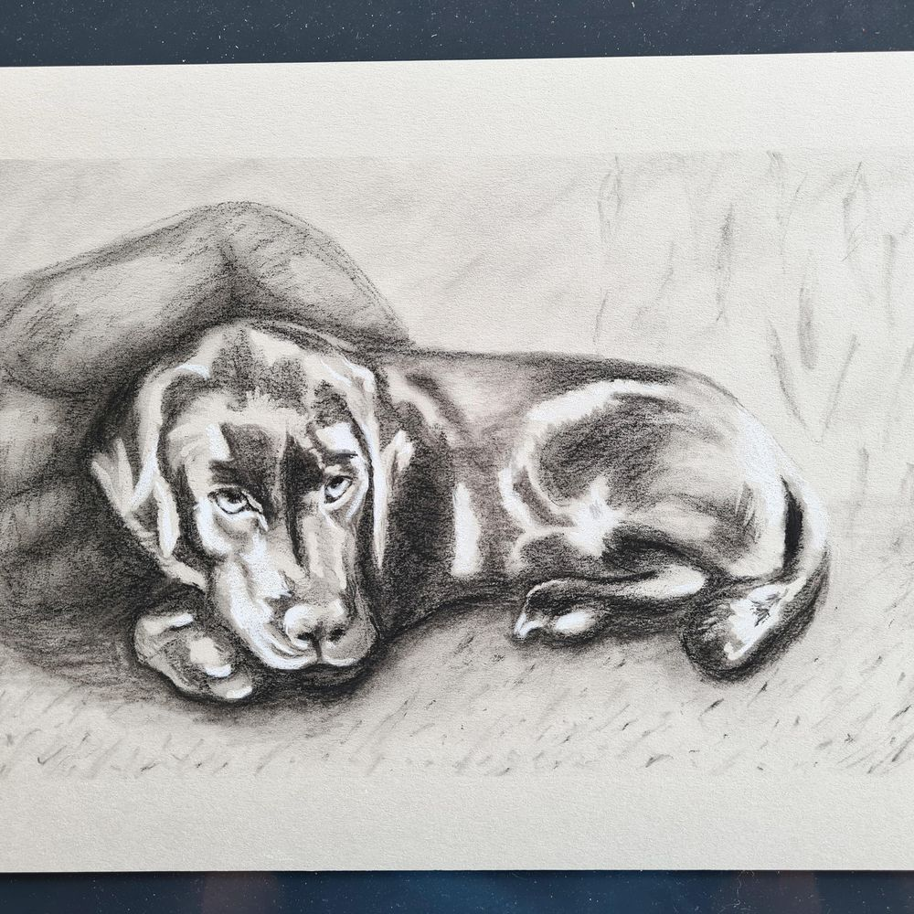 A different puppy - image 1 - student project