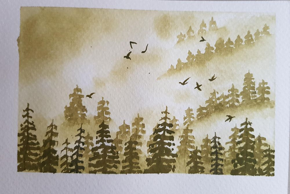 Misty pine trees - image 1 - student project