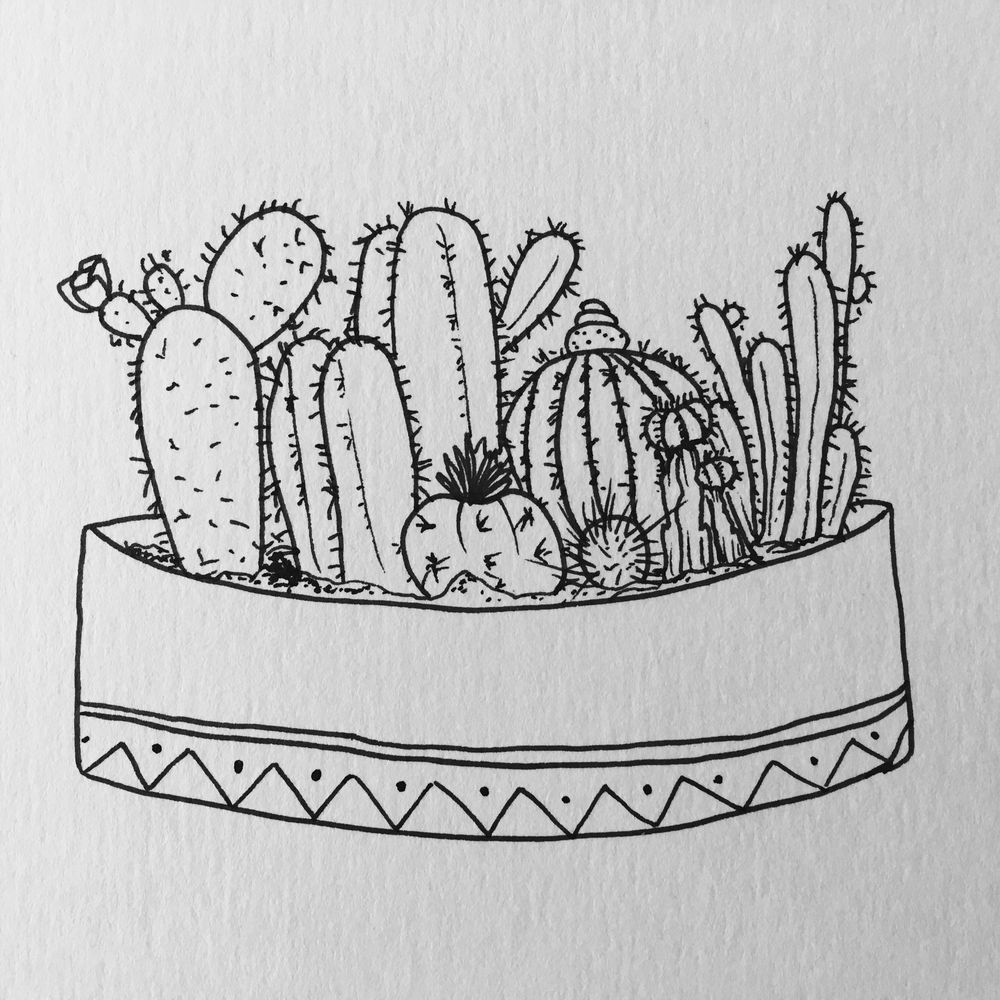 My cactus and succulent gardens - image 1 - student project