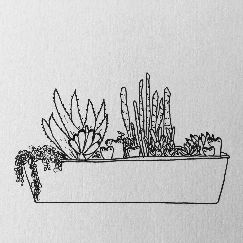 My cactus and succulent gardens - image 2 - student project