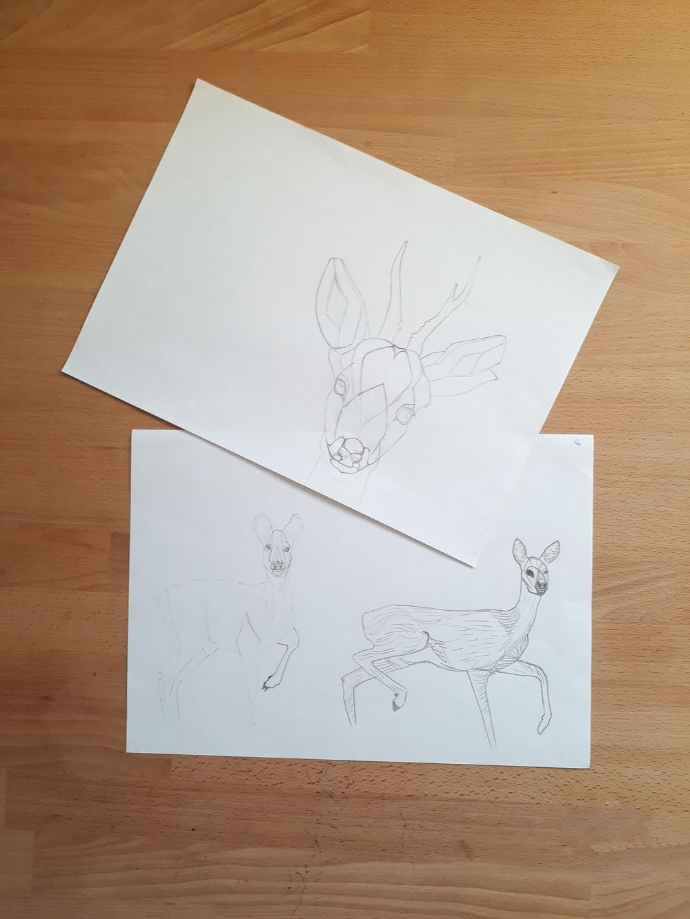 Roe Deer - image 1 - student project