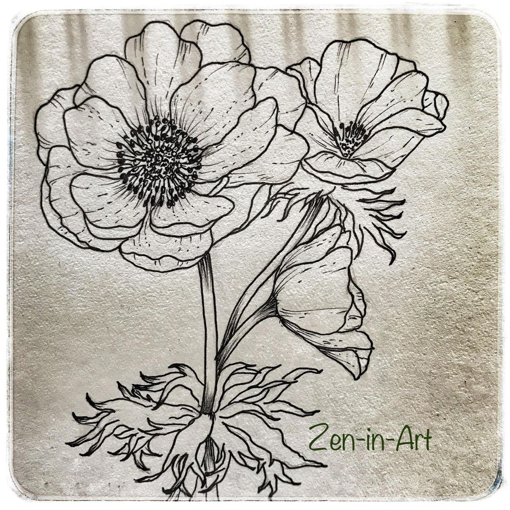 Anemones - the wind flower - image 1 - student project