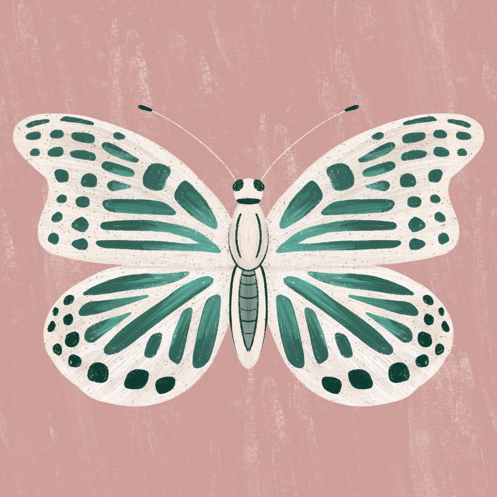 Insect Illustrations - image 3 - student project