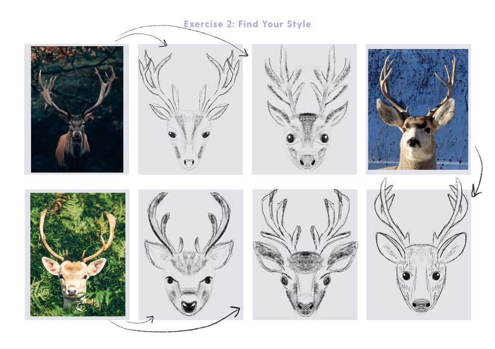 Deer symmetry illustration - image 5 - student project