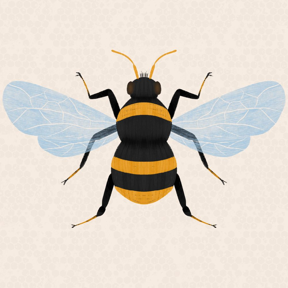 Insect Illustrations - image 6 - student project