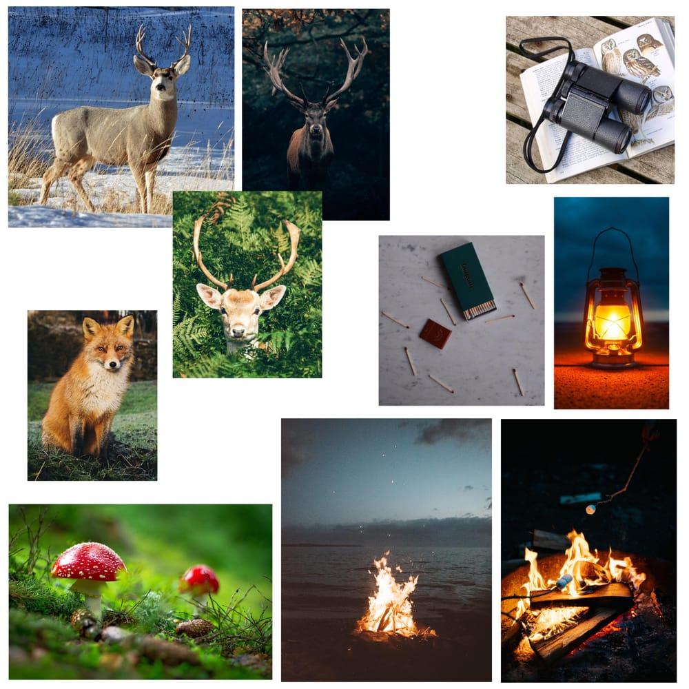 Deer symmetry illustration - image 4 - student project
