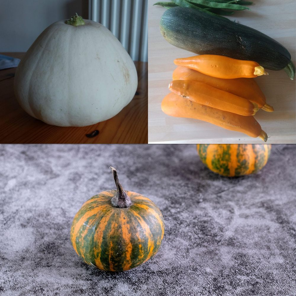 Watercolour gourds - image 7 - student project