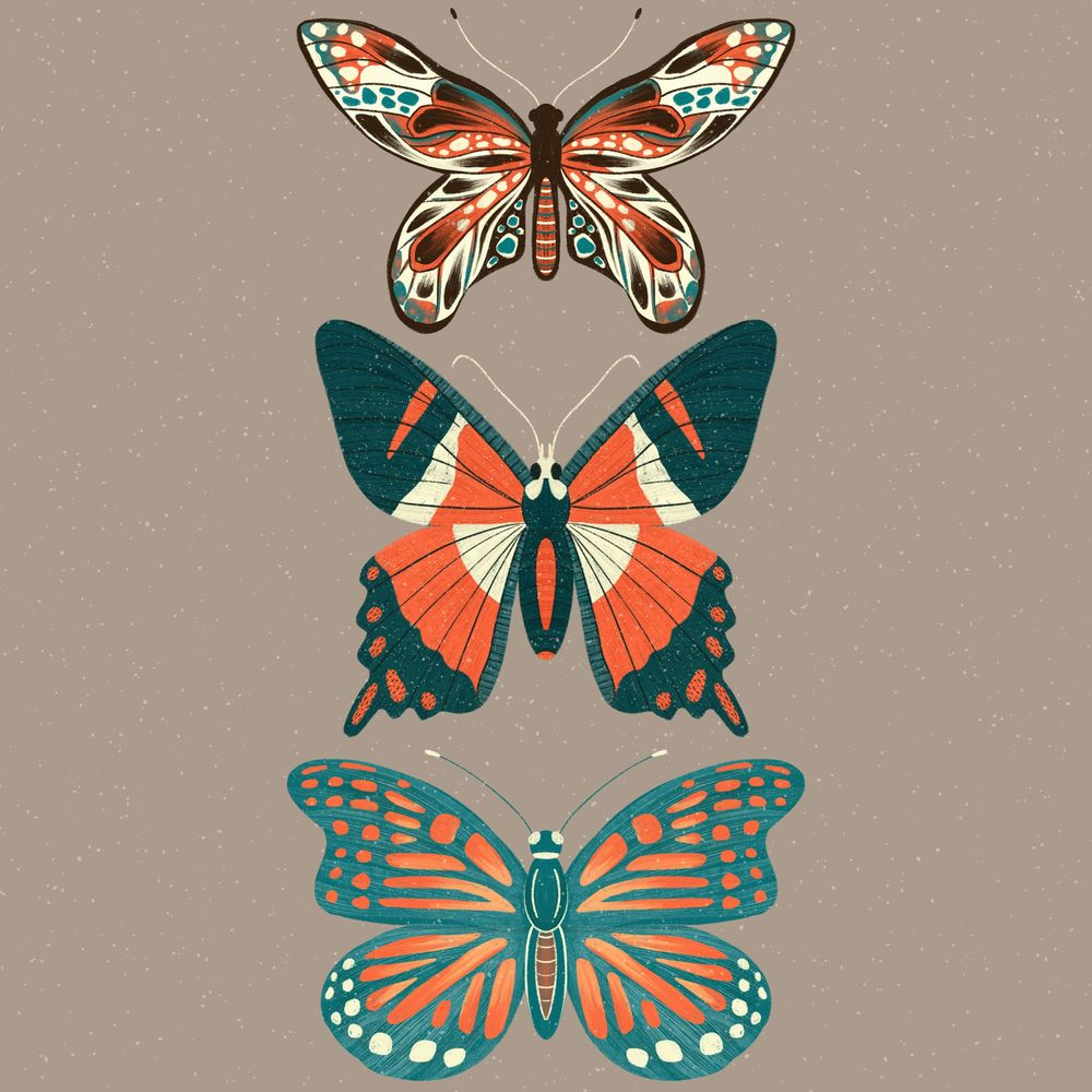 Insect Illustrations - image 4 - student project
