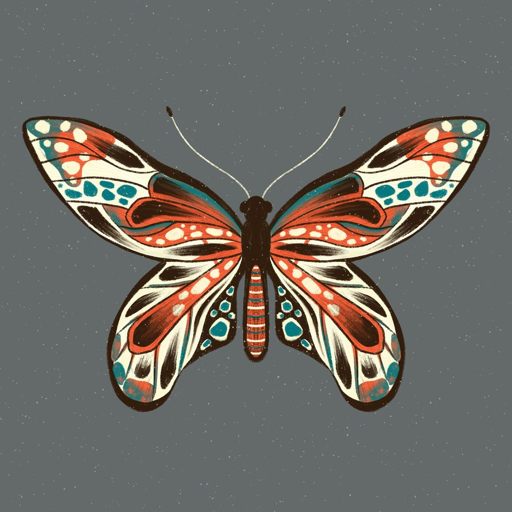Insect Illustrations - image 1 - student project