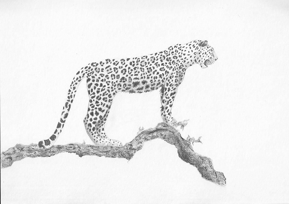 Jungle Scene - image 3 - student project