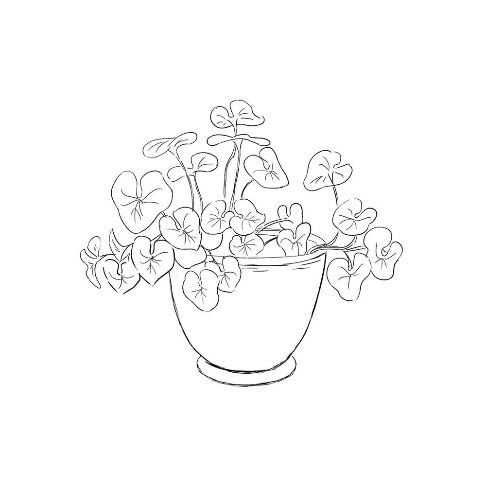 A Potted Plant - image 1 - student project