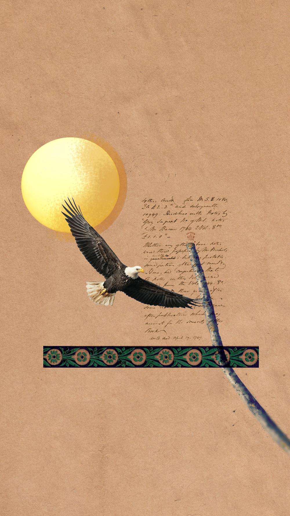 Sun Eagle - image 1 - student project