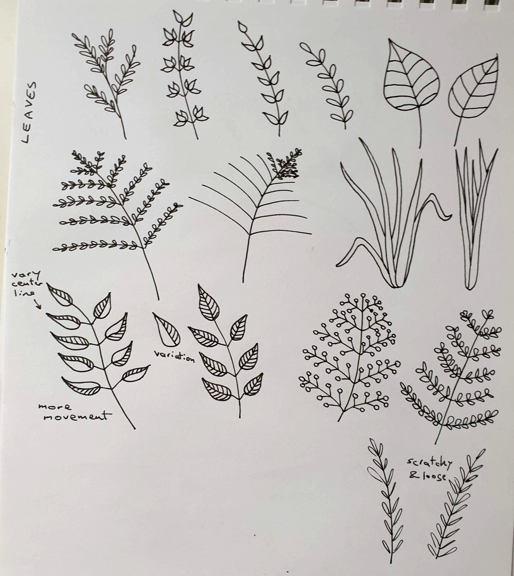 Botanical Line Drawing - image 2 - student project