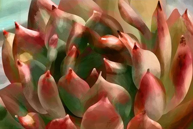 Succulent digital painting (procreate on iPad) - image 7 - student project