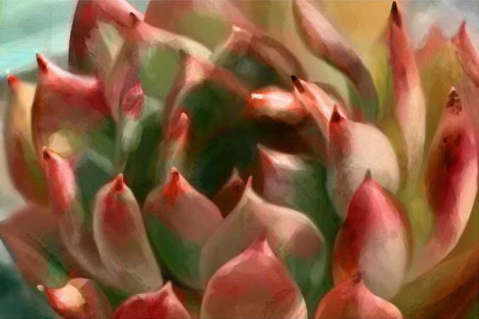 Succulent digital painting (procreate on iPad) - image 1 - student project