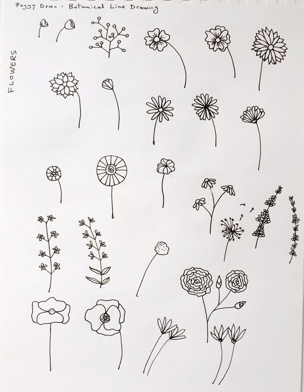 Botanical Line Drawing - image 1 - student project
