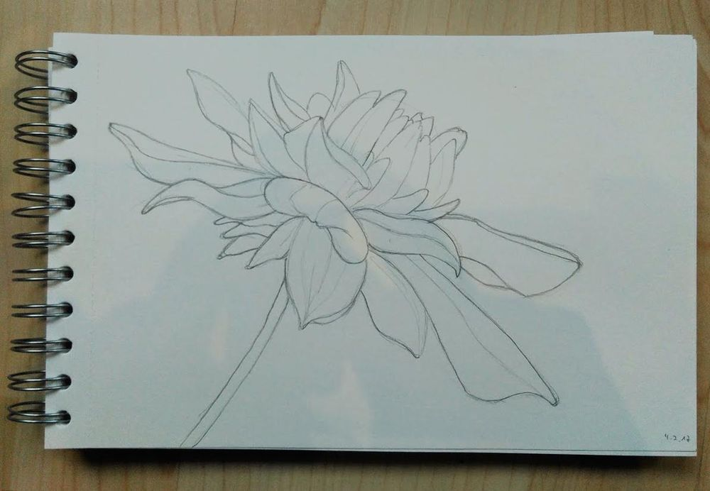 Dahlia - image 1 - student project