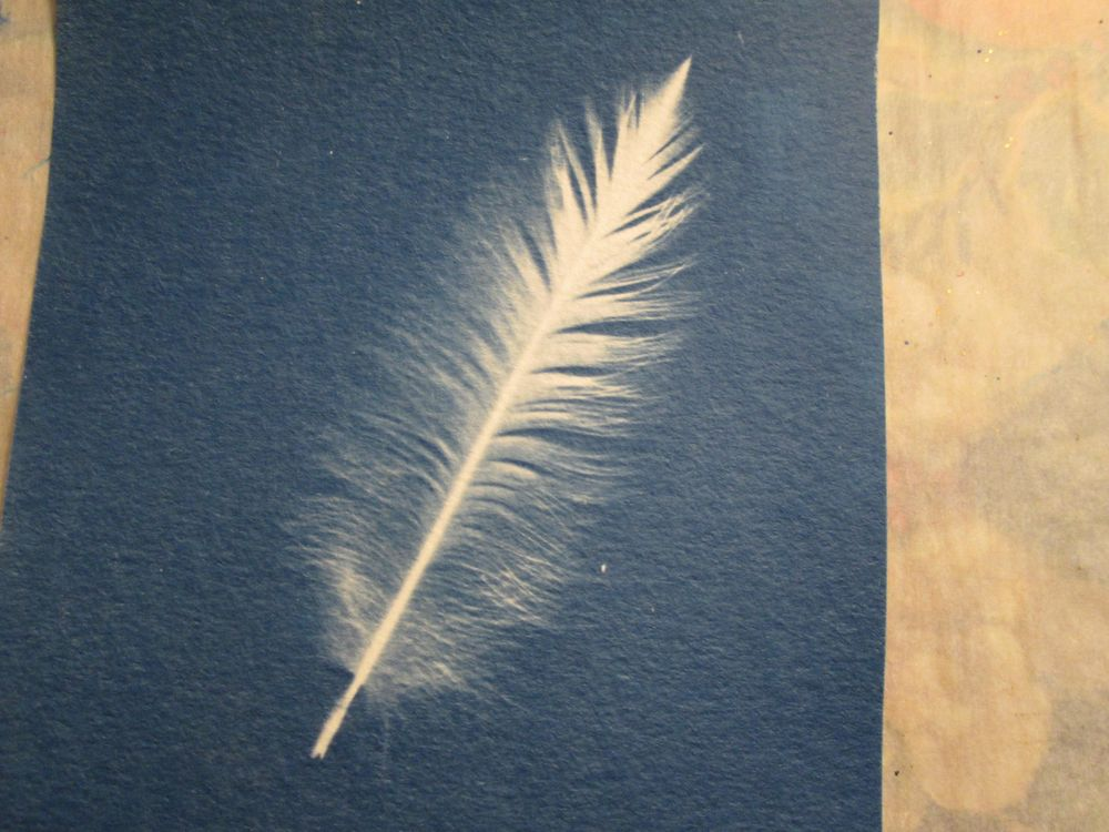 Cyanotype Angel and Feather - image 1 - student project