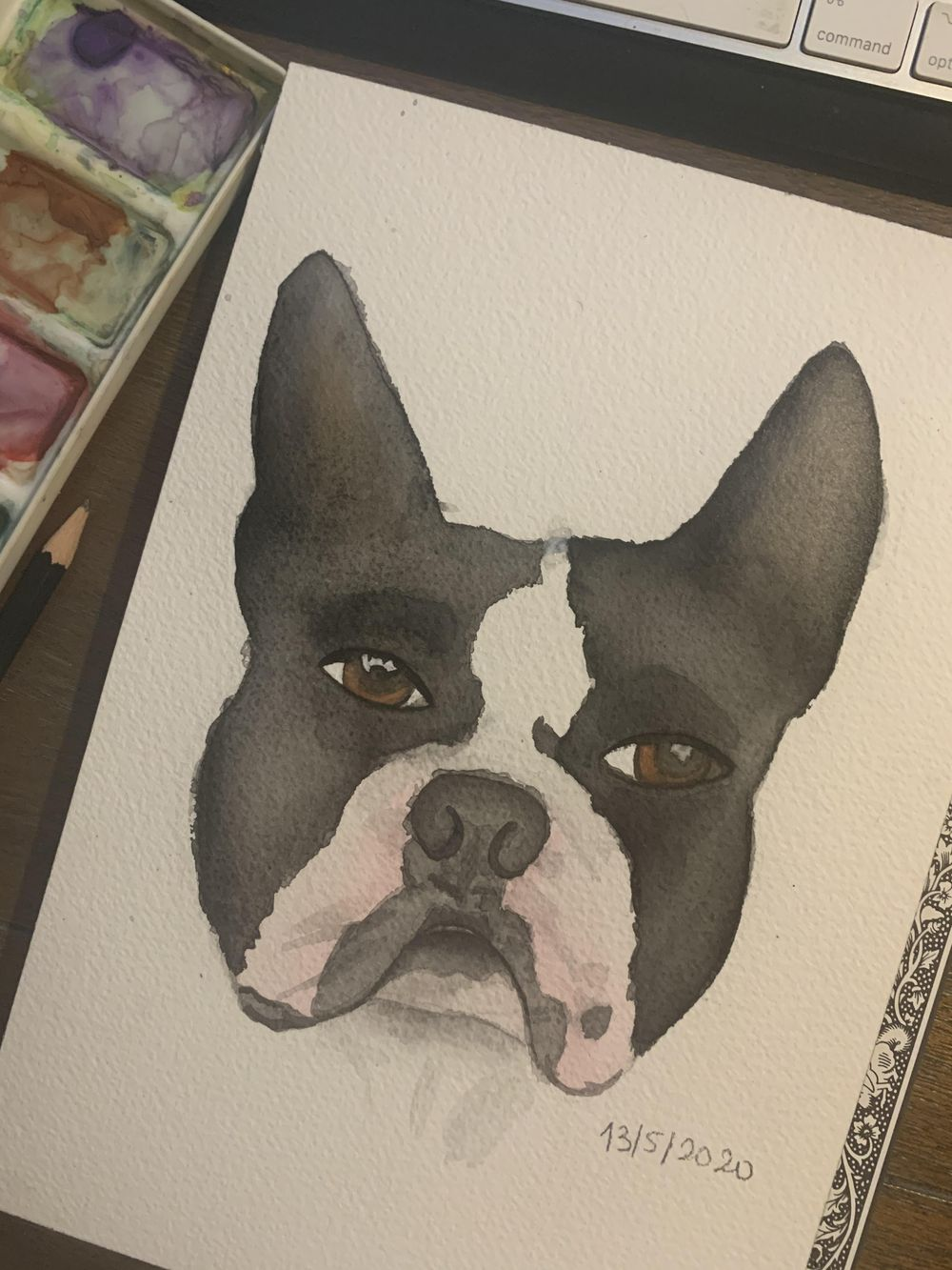 my dogs portraits - image 2 - student project